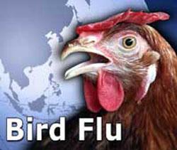 Bird-flu_1